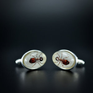Ant Cufflinks -  Taxidermy Big-head Ant cuff links -