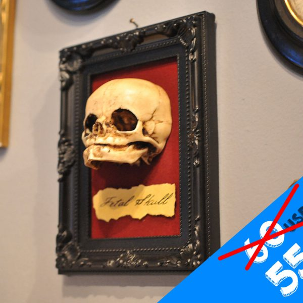Oddity - Fetal Skull display replica  - Victorian Oddities wall decor