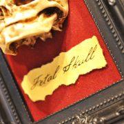 Oddity - Fetal Skull display replica  - Victorian Oddities wall decor