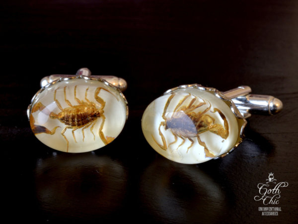 Scorpion Cufflinks -  Taxidermy Manchurian Golden Scorpion cuff links -