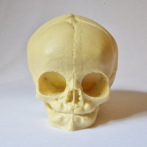Skull  - real size resin fetus skull natural bone color - Goth Oddity home decor or craft supply. -